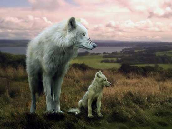 el espiritu del lobo tu espada mental